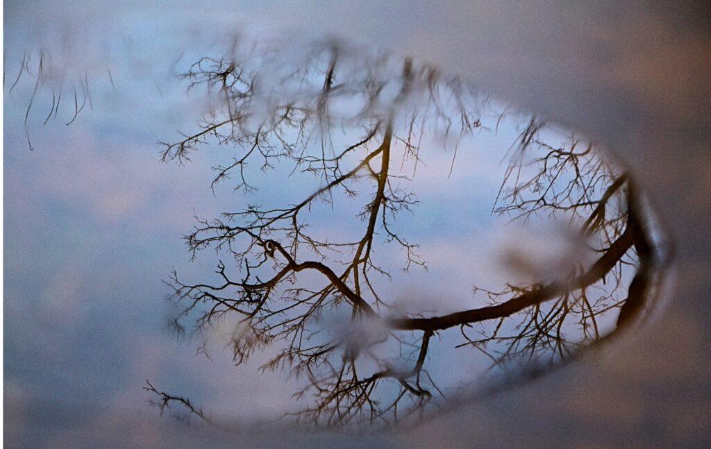 Collage_Fotordjjdjdjd_Veronika_Sonderpreis_1